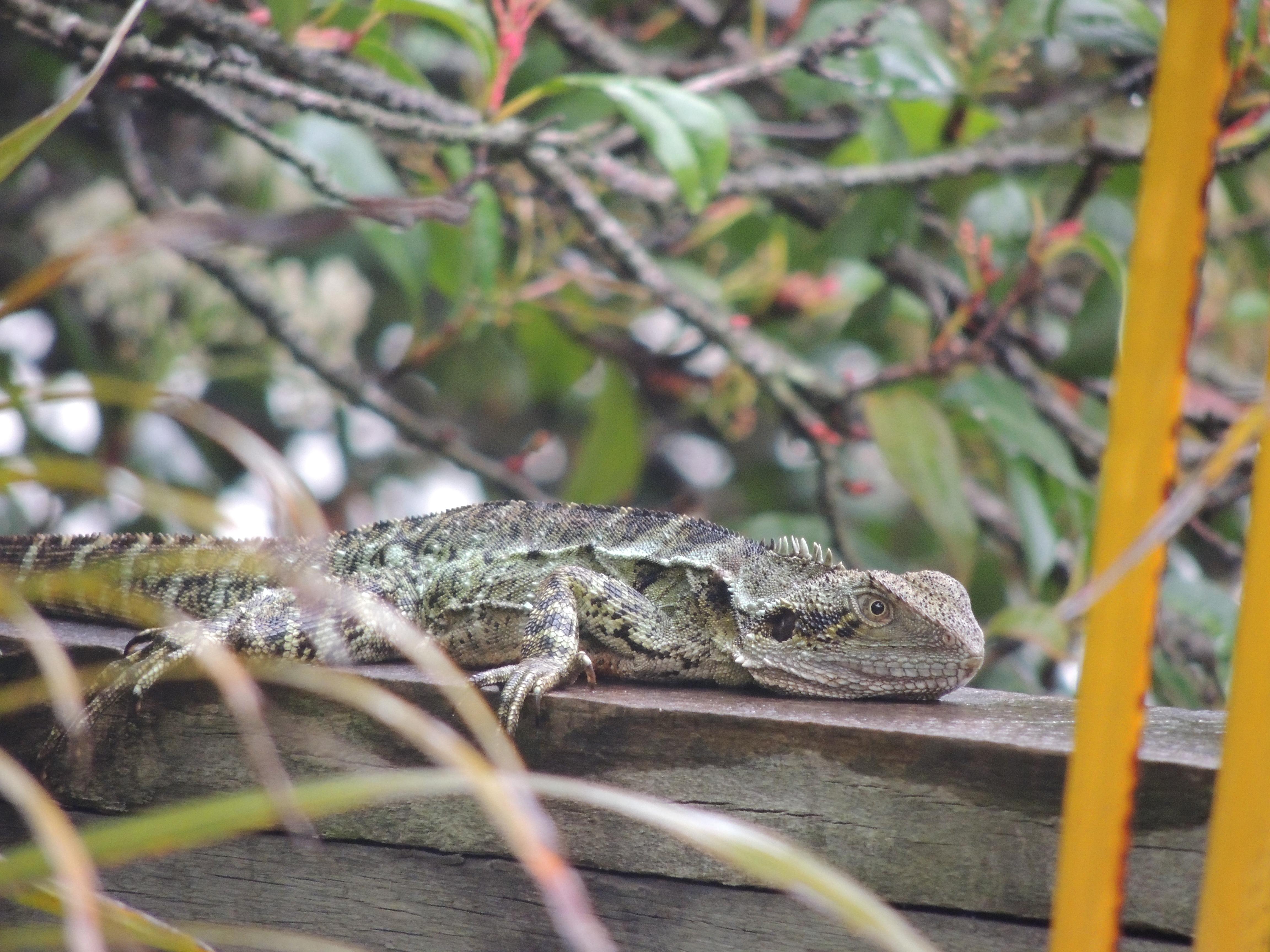 backyard critters u2013 brisbane